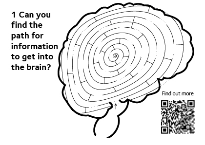Blank maze for people to complete, showing the path for information to get into the brain.