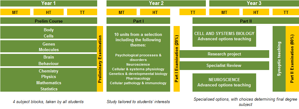 BMS Course Structure diagram.png