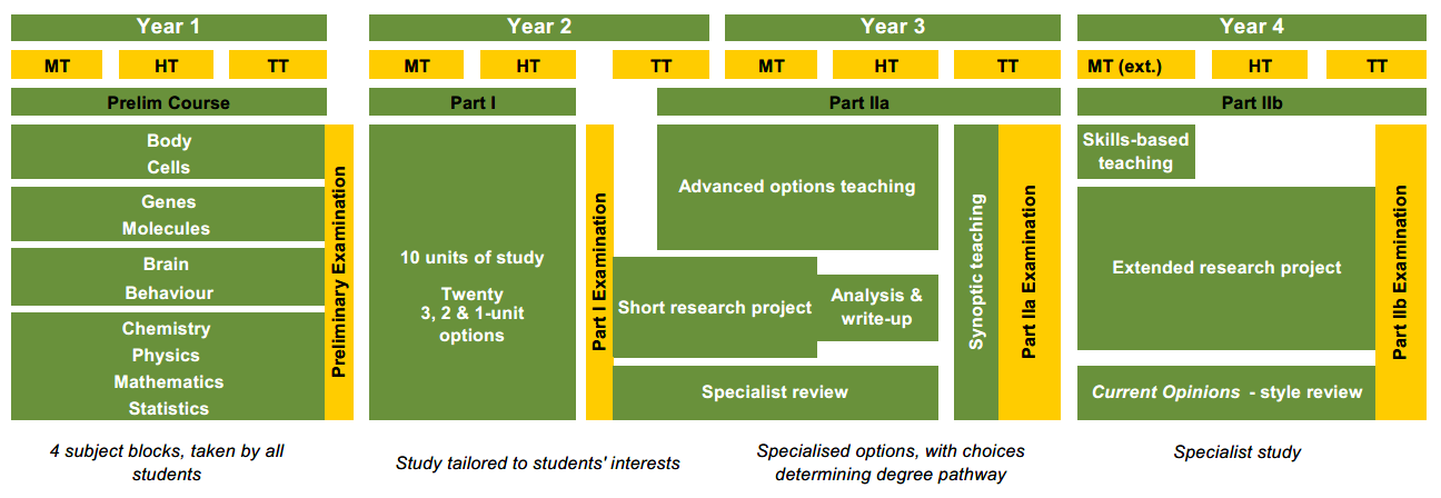 Chart showing the structure of the Biomedical Sciences course. This information is available in text from the View text version of the summary chart link above the image.